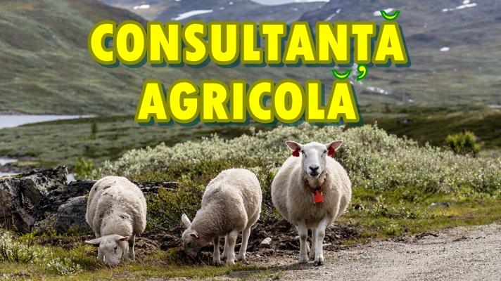 consultanta_agricola_foto